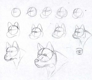 how-to-draw-a-dog-1
