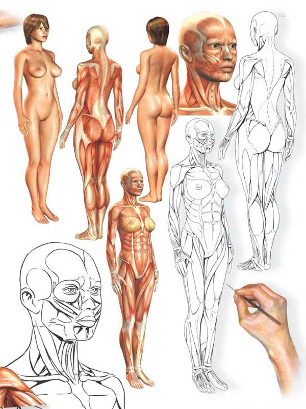 Human anatomy artists