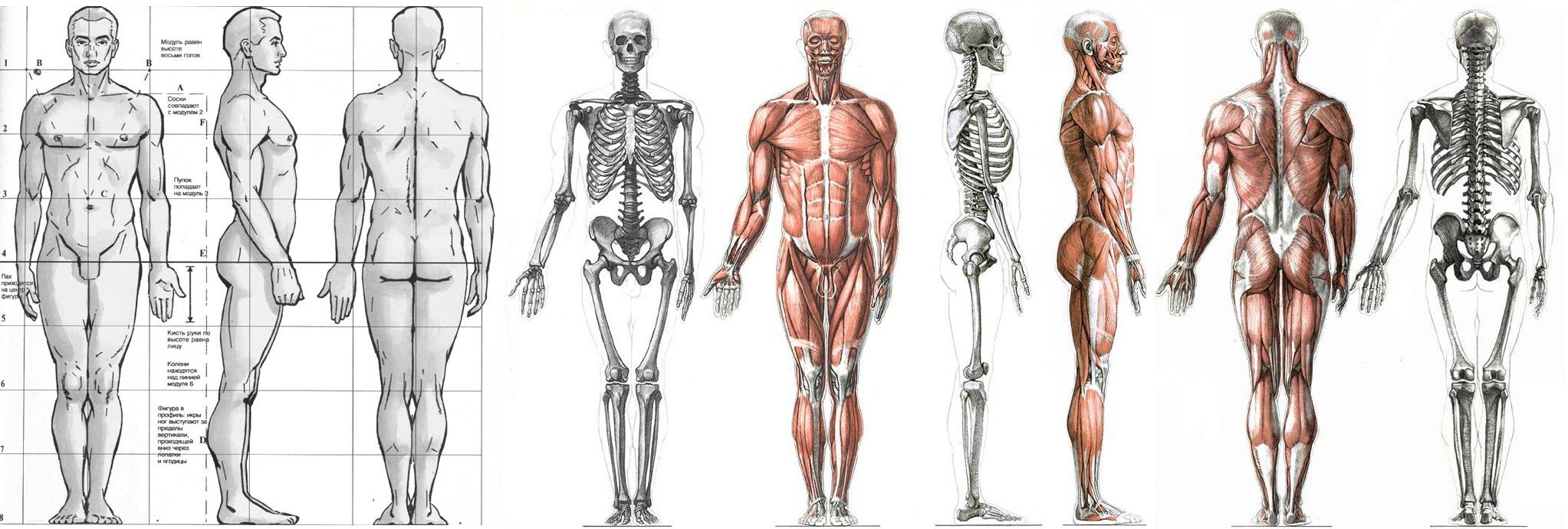 Aaa Anatomy Jobs 8941396 Togelmayafo
