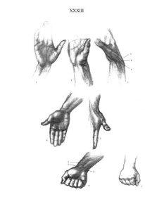 Основы и особенности рисования анатомии человека