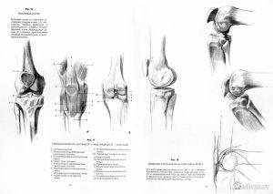 пластическая анатомия скелета