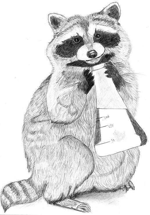 Картинка как нарисовать енота
