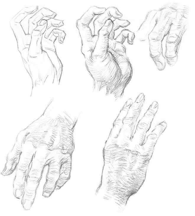 Нарисованные кисти рук картинки