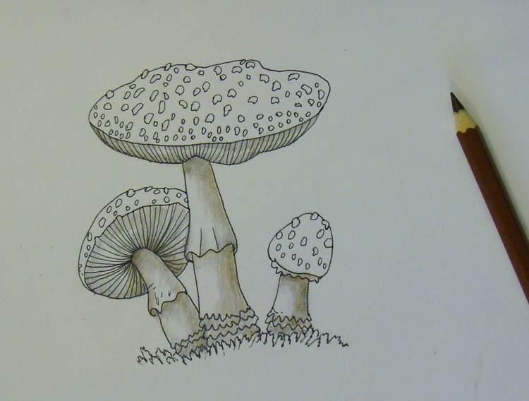 Как нарисовать грибы карандашом | Art-matita Блог